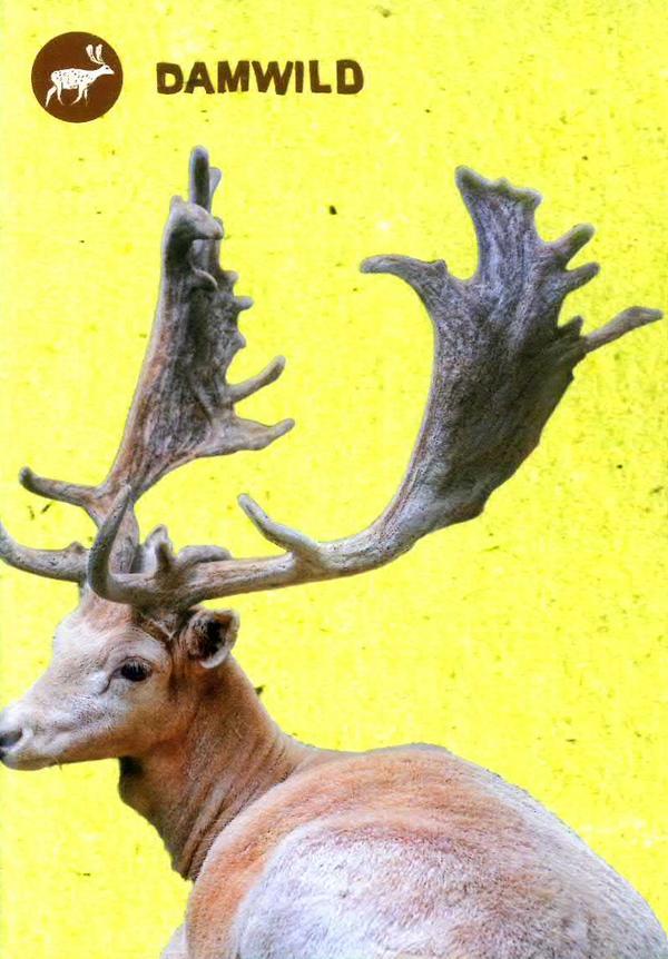 Wildpark - Damwild