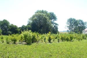 Foto: Grünzug am Güßgraben