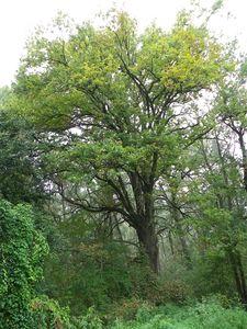 Naturschutz _ Naturdenkmal _ Nr.16